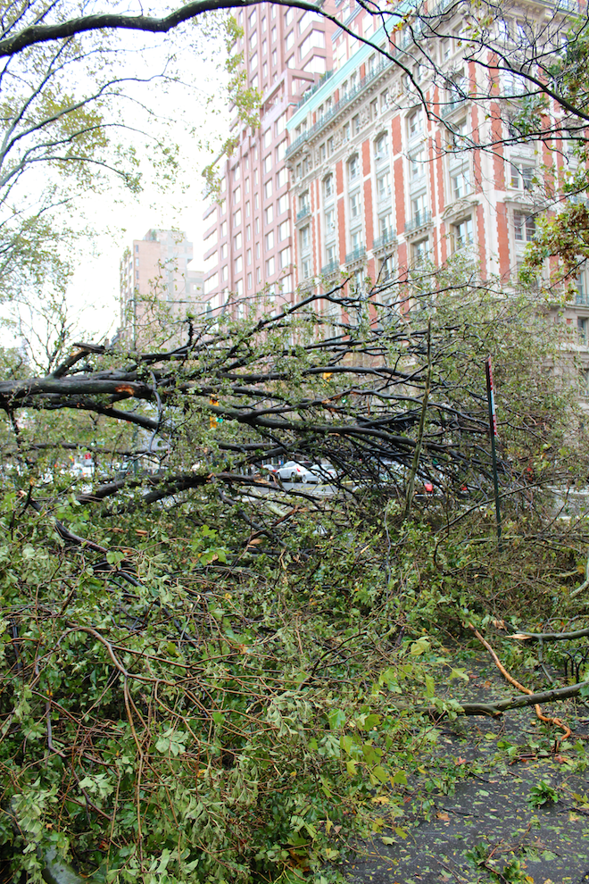 Downed tree near Natural History Museum